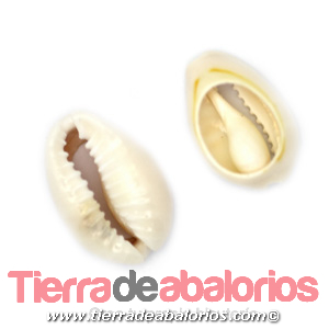 Concha Natural 17x12mm (Pack 10 unidades)